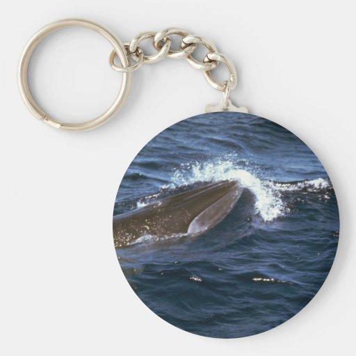 La ballena de Bryde Llavero Personalizado