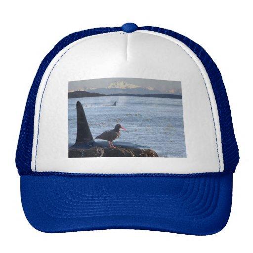 La ballena de la orca, colector de ostra conecta e gorra