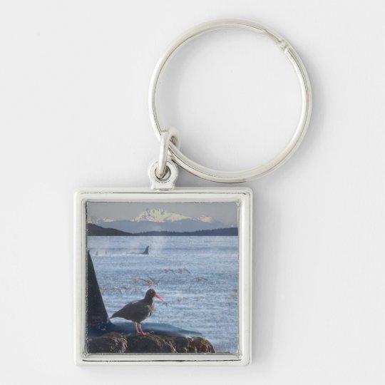 La ballena de la orca, colector de ostra conecta e llavero cuadrado plateado
