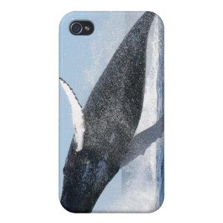 La ballena jorobada que salta arriba iPhone 4/4S carcasa