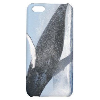La ballena jorobada que salta arriba