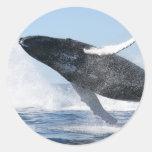 La ballena jorobada que salta arriba etiqueta redonda