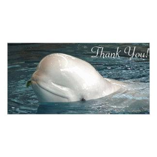La ballena linda de la beluga pega la cara fuera tarjetas fotograficas