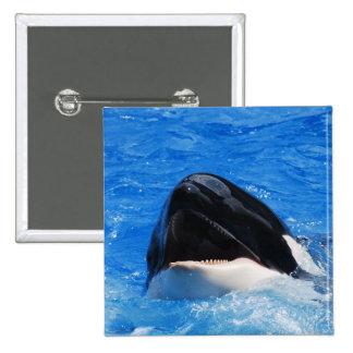 La ballena suena el Pin