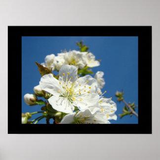 La bella arte imprime las flores de la flor de cer poster