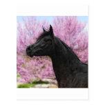 La belleza de ella toda tarjetas postales