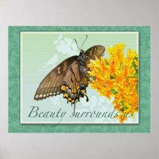 La belleza de la mariposa de Swallowtail del tigre Póster