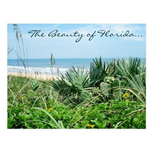 La belleza de la postal de la Florida/de la postal