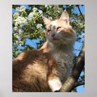 La belleza que es un poster del gato