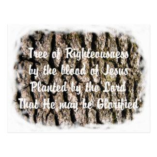 La biblia de la naturaleza de la corteza de árbol postal