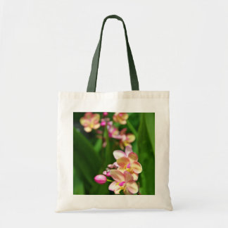 La bolsa de asas del Orchidaceae