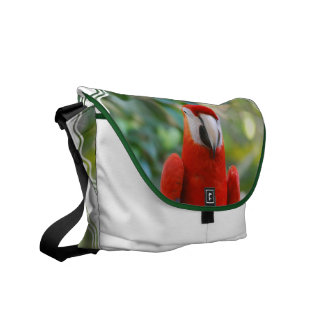 La bolsa de mensajero roja brillante del loro bolsa messenger