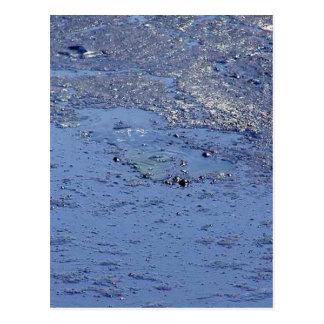 La Brea Tarpits Ponds Postcard