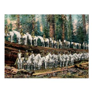 La caballería marcha en la postal del vintage del