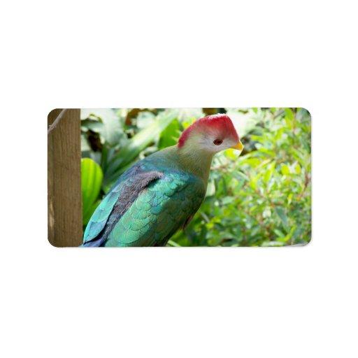 La cabeza colorida del pájaro giró el poste etiquetas de dirección