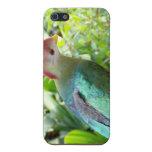 La cabeza colorida del pájaro giró el poste iPhone 5 protector