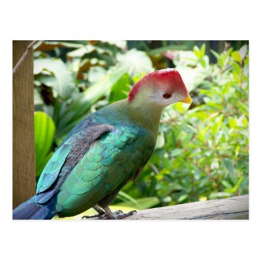 La cabeza colorida del pájaro giró el poste tarjeta postal