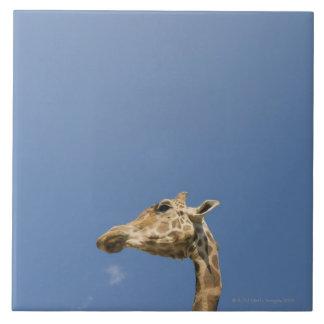La cabeza de la jirafa azulejos