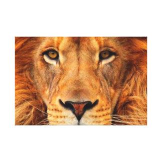 La cabeza del león magnífico maravillosamente real lona estirada galerías