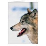 La cabeza del lobo tarjetas