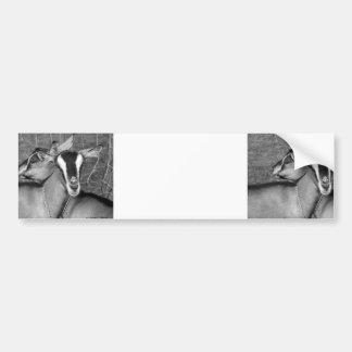 La cabra alpina/de Oberhasli hace el bw de la foto Pegatina Para Auto