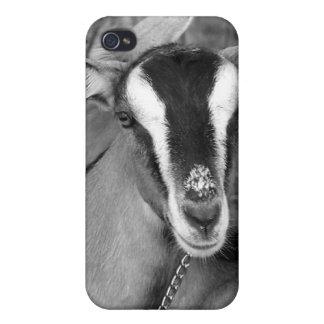 La cabra alpina de Oberhasli hace el bw de la foto iPhone 4 Fundas