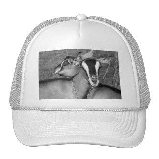La cabra alpina/de Oberhasli hace el bw de la foto Gorra