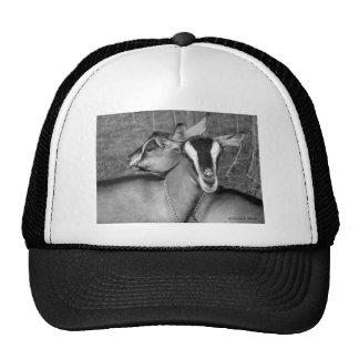 La cabra alpina/de Oberhasli hace el bw de la foto Gorras