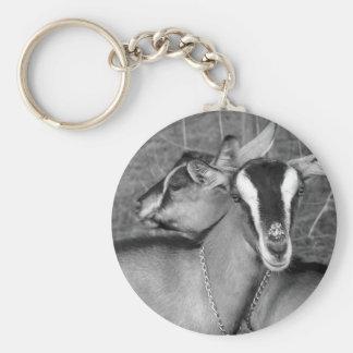 La cabra alpina de Oberhasli hace el bw de la foto Llaveros