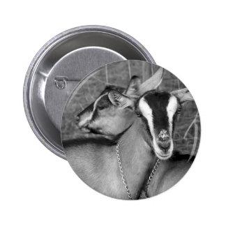 La cabra alpina/de Oberhasli hace el bw de la foto Pin Redondo De 2 Pulgadas