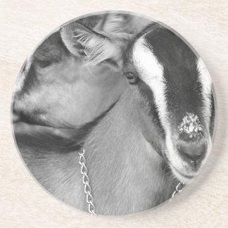 La cabra alpina/de Oberhasli hace el bw de la foto Posavasos Diseño