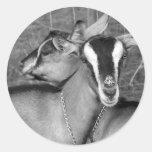La cabra alpina/de Oberhasli hace el bw de la Etiqueta Redonda