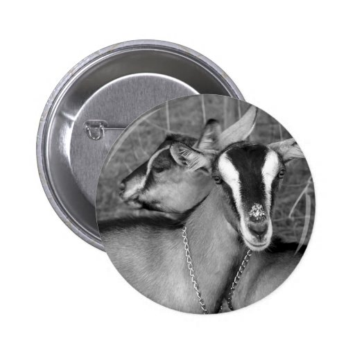 La cabra alpina/de Oberhasli hace el bw de la Pin Redondo De 2 Pulgadas