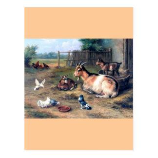 La cabra de la granja embroma palomas postal