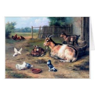 La cabra de la granja embroma palomas tarjeta de felicitación