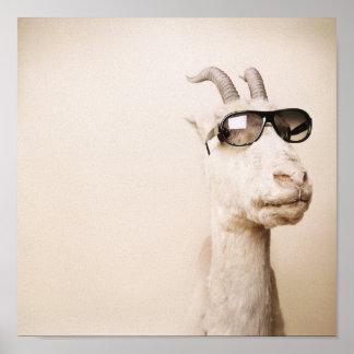 La cabra póster