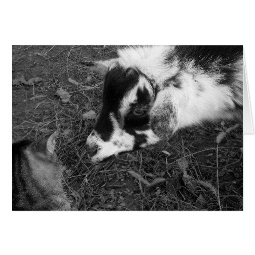 La cabra se acerca prudentemente al gato tarjeta pequeña