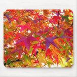 La caída amarillo-naranja roja del otoño deja Mous Tapete De Ratón
