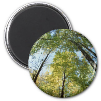 La caída colorea - Great Smoky Mountains - árboles Imanes Para Frigoríficos