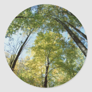 La caída colorea - Great Smoky Mountains - árboles Etiquetas Redondas