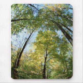 La caída colorea - Great Smoky Mountains - árboles Tapetes De Ratón