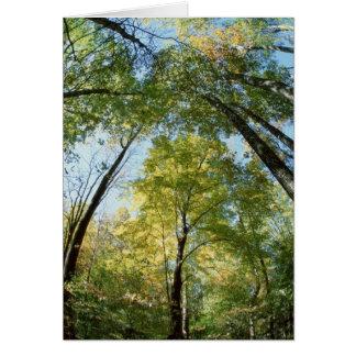 La caída colorea - Great Smoky Mountains - árboles Tarjeta De Felicitación