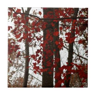 La caída colorea las hojas de arce canadienses roj azulejo cerámica