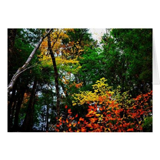 La caída colorida deja la tarjeta