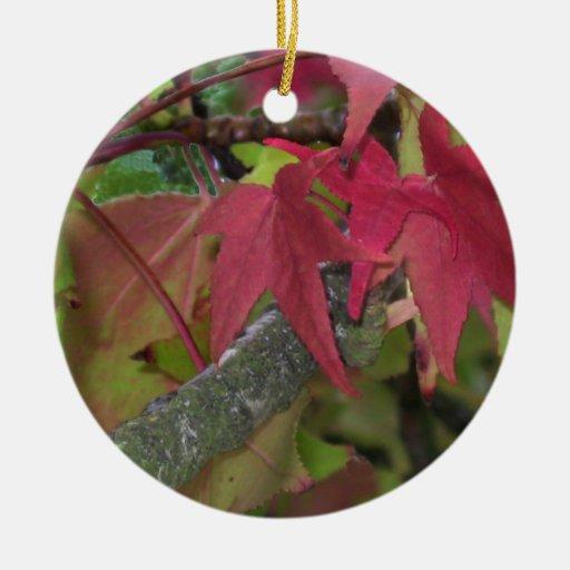 La caída comienza - las hojas de arce están dando  ornamentos de navidad