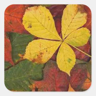 La caída del otoño deja amarillo-naranja verde pegatina cuadrada