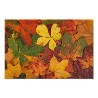 La caída del otoño deja la impresión de la foto