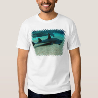 La camiseta de los hombres del tiburón de arena poleras