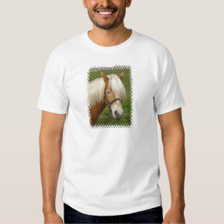 La camiseta linda de Pony Hombre del Palomino Camisas