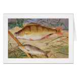 La captura de un pescador de los pescados gruesos  tarjeta de felicitación